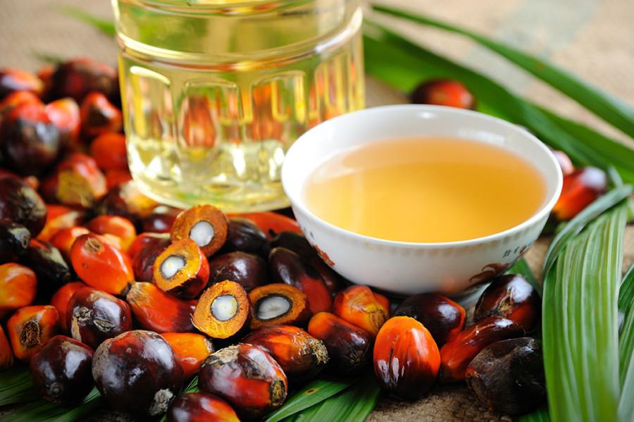 ¿Es tan malo el aceite de palma? AECOSAN nos lo aclara - Hostelería Madrid