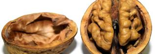 Comer con el paladar, un acto del cerebro - Hostelería Madrid