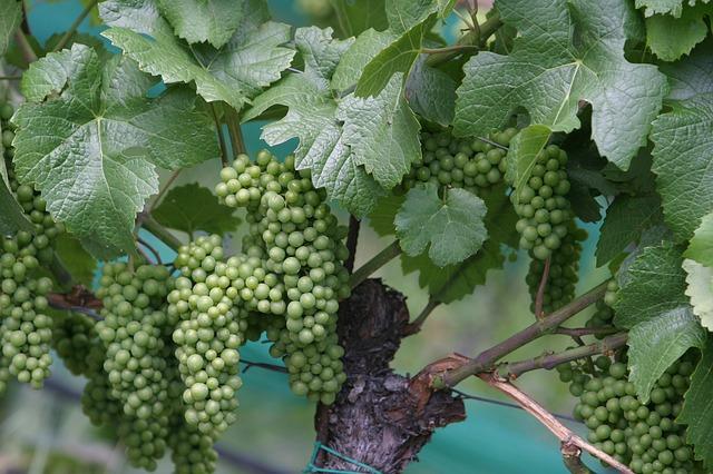 wine-207782_640