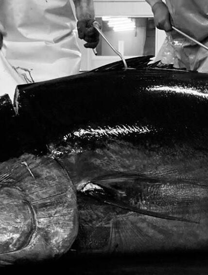 Herpac, la mojama de atún más famosa del mundo