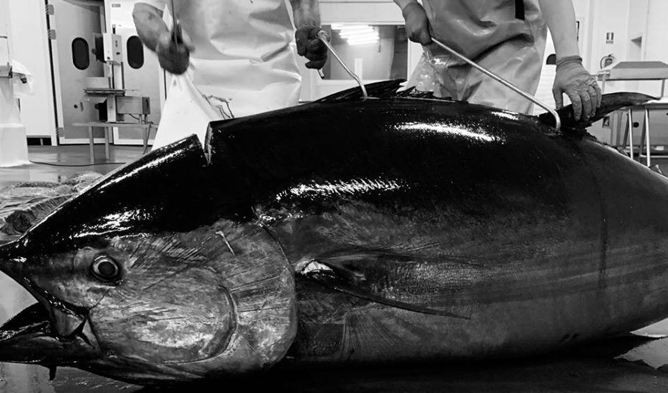 Herpac, la mojama de atún más famosa del mundo - La Viña