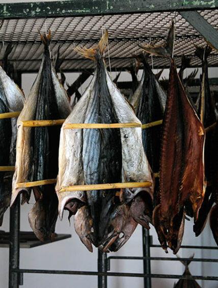 ¿Cuál es el mejor atún para consumir?